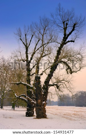 Winter landscape in a park in Magdeburg