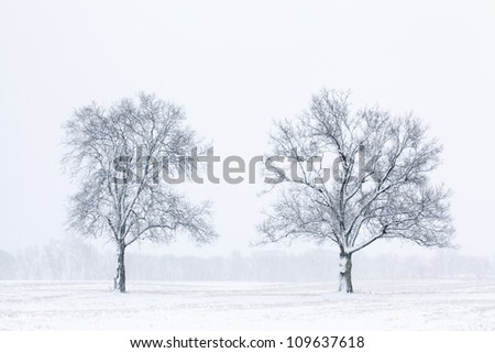 Winter landscape in black and white of snow flocked trees in a rural landscape, Michigan, USA