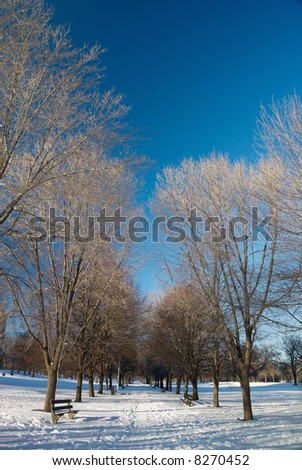 Winter landscape in city park with trees and benches - stock photo
