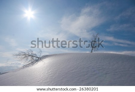 Winter landscape in mountains with pine on a beautifull sunny day