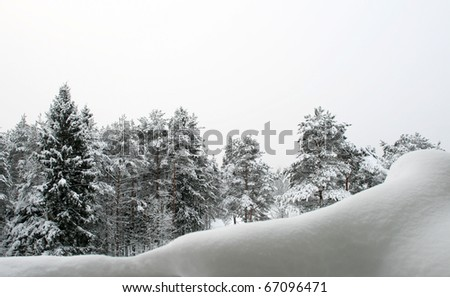 Winter Landscape in Northwest Russia