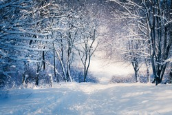 Winter landscape in snow forest.