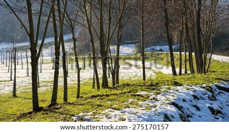 Winter landscape in the countryside with trees and snow #275170157
