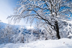 Winter landscape in the daytime. The forest and mountains under the snow. Snowy backgrounds. Snowy weather and snowfall. Clear blue sky.