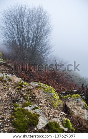 Winter landscape in the foreground rocks with moss, in the background a tree hidden by fog