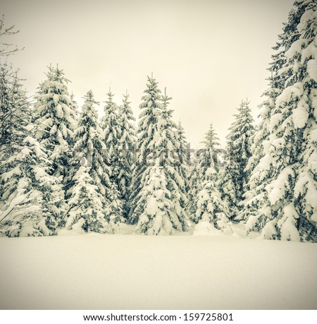winter landscape in the forest. ...