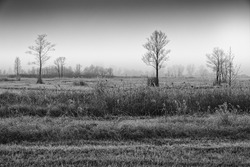 Winter landscape in the Murnau Moos, softly blurred by fog, black and white photo, South Bavaria, Germany