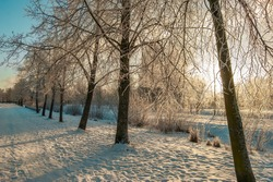 Winter landscape in the park. Frosty trees in a snow-covered forest on a sunny morning. Calm winter nature in the sunlight. Sunrise. Sunset.