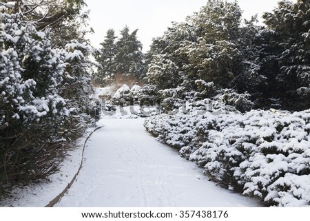 Winter landscape in the park. Juniper, spruces and trees under snow. Lighting of the sun. It\'s slow snowing.