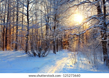 winter landscape in the park on a sunny day, the trails in the snow and frost on trees