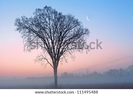 Winter landscape of bare trees and crescent moon at dawn, Fort Custer State Park, Michigan, USA