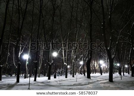 Winter landscape of city park at night