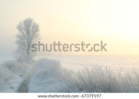 Winter landscape of frosted tree on the edge of the river on a foggy morning.