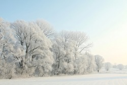 Winter landscape of frosted trees against a blue sky on a sunny morning.