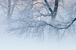 Winter landscape of frosted trees in fog at sunrise on a frigid morning, Milham Park, Kalamazoo, Michigan, USA