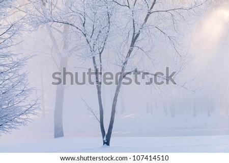 Winter landscape of frosted trees in light fog and shaft of light at sunrise on a frigid morning, Michigan, USA