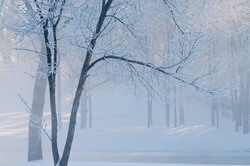 Winter landscape of frosted trees in light fog at sunrise on a frigid morning, Milham Park, Kalamazoo, Michigan, USA