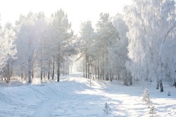 Winter landscape of frosty trees, white snow in city park. Trees in hoarfrost. Seasons, climate change, ecology, environment. Extremely cold winter