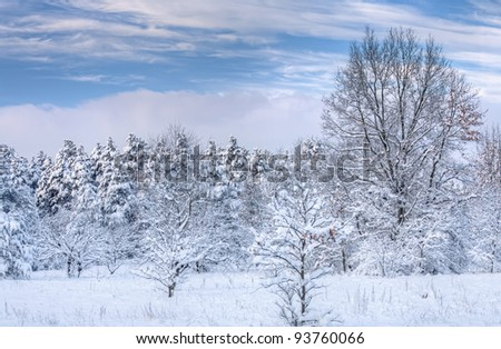 Winter landscape of snow flocked trees, Allegan State Forest, Michigan, USA