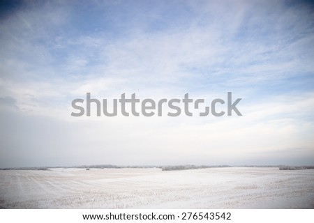 winter landscape of young grey forest with bright blue sky #276543542
