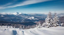 Winter landscape on a sunny day. Little spruce under snow in the mountains. Awesome Wintry nature scenery. Amazing natural background. Christmass concept. Carpathian national park, Ukraine, Europe.