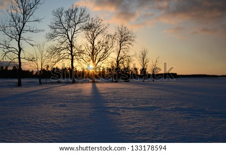 Winter landscape on a sunset with tree silhouette