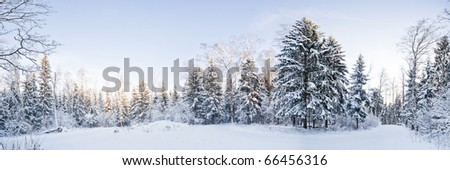 Winter landscape panorama - forest and snow