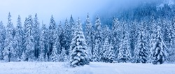 Winter landscape. Panoramic winter forest. Snowy Christmas trees covered by hoarfrost in mountains. Frosty nature in mountain valley