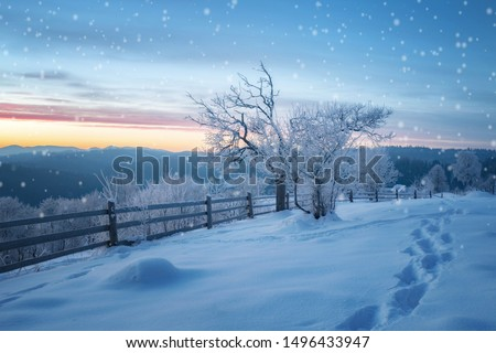 winter landscape. pine trees covered with snow #1496433947