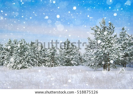 Winter landscape. Pine trees covered with snow. #518875126