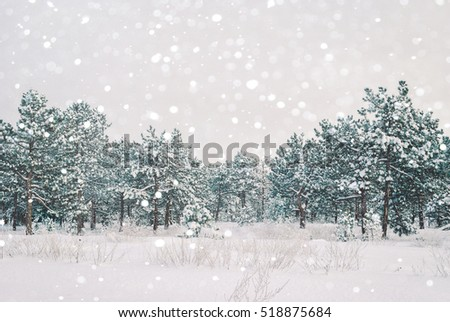 Winter landscape. Pine trees covered with snow. #518875684