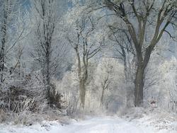 Winter landscape, Poland, Masuria