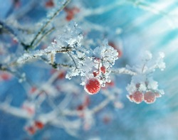 Winter landscape.snow-covered branches