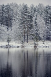 Winter landscape: snow-covered forest on the lake, the reflection of snow trees in the water.