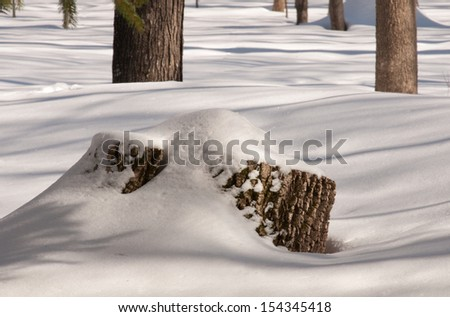 Winter landscape: snow covered tree stump in the North Woods