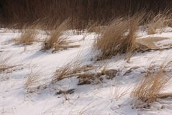 winter landscape, snowy seaside with dry grasses and shadows, windy day.