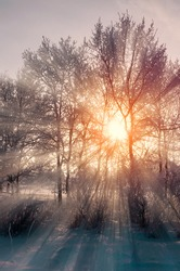 Winter landscape, sunrise in the winter forest. Wonderland winter forest, bare trees and snowdrifts on the foreground. Winter forest sunny scene