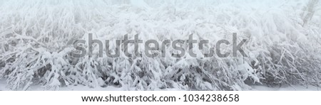 Winter landscape. The branches of the trees are covered with fluffy white snow after a snowfall. #1034238658