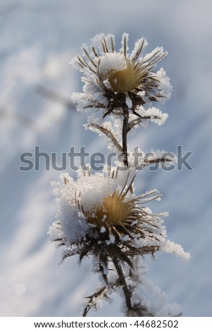 Winter landscape thistle covered with snow and blue sky.