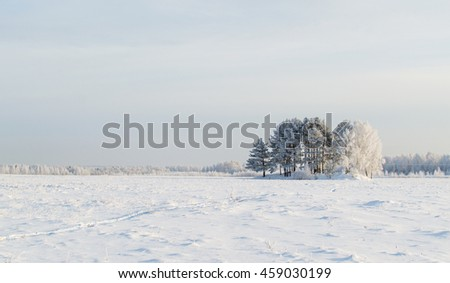 winter landscape. trees covered ...