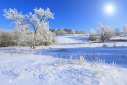 Winter landscape trees in frost in a snowy field in the early frosty morning