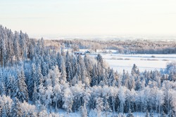Winter landscape view of the woods