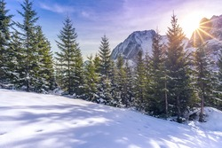 Winter landscape where everything is covered in snow, the glades, the fir forest and the Austrian Alps peaks, but warmed up by a beautiful bright  sun.