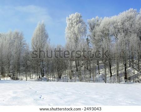 Winter landscape. White frost