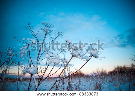 Winter landscape.Winter scene - stock photo