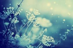 Winter landscape.Winter scene .Frozen flower
