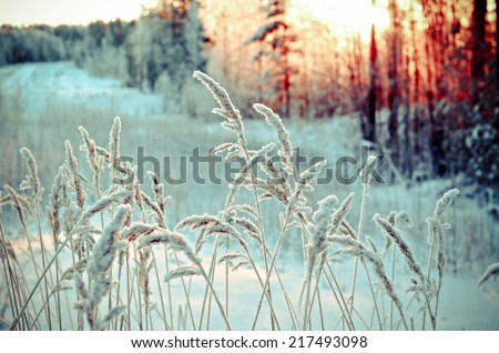 Winter landscape.Winter scene .Frozenned flower