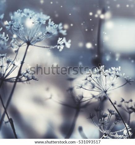 Winter landscape.Winter scene .Frozenned flower #531093517