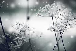 Winter landscape.Winter scene .Frozenned flower/ selective focus