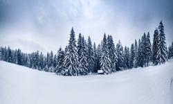 Winter landscape. Winter scene. Snowfall in mountains. Snowy winter nature.